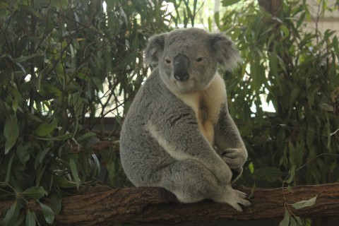 Schüleraustausch mit Australien 2014