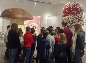 Führung: Pilzausstellung