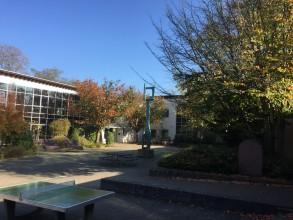 Neubauticker: Baumfällungen