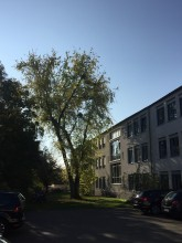 Bauticker: Baumfällungen